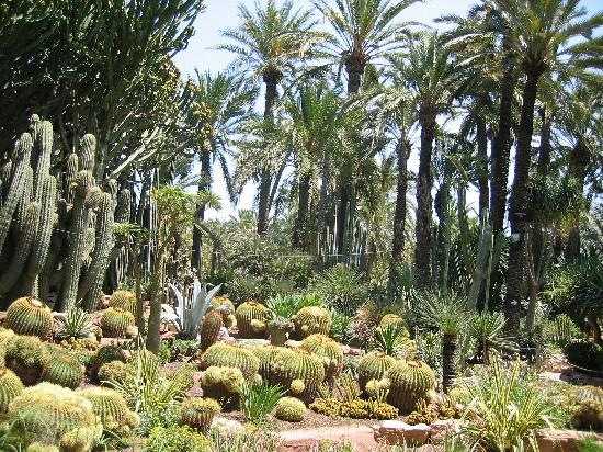 Une multitude de plantes grasses - Foto di Palm Groves (Palmeral) of Elche, E...