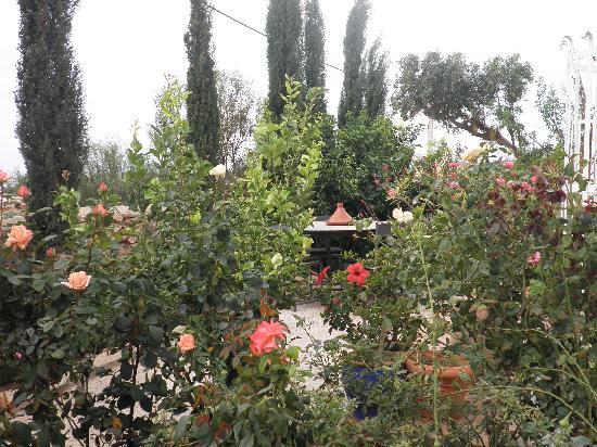 Cap Sim House: le jardin