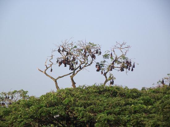 Shwe Tha Zin Hotel: Fruit bats