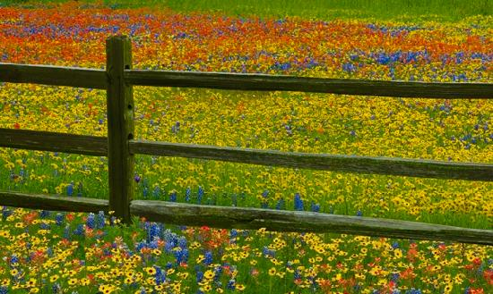 Brenham, Τέξας: Wildflowers in Washington County