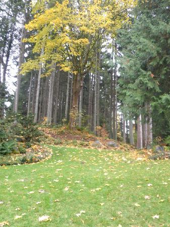 Bloedel Reserve: Tall trees