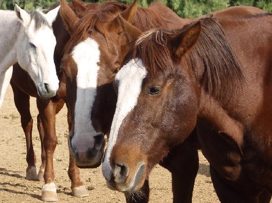 Rancho de los Caballeros: horses