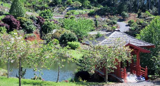 Tasmania I Drive: Beautiful Rhododendron Gardens