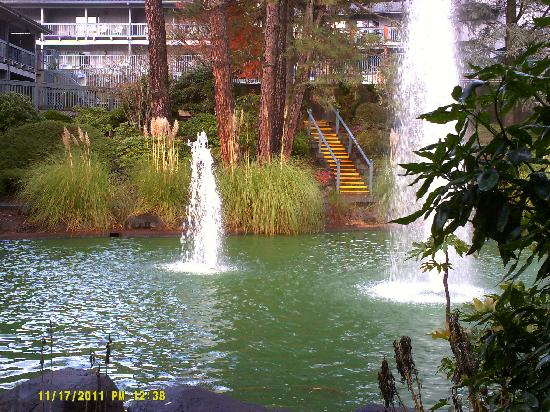 Shilo Inn Hotel & Suites - Beaverton : Pond view from room