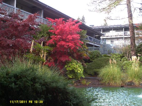 Shilo Inn Hotel & Suites - Beaverton: Beautiful Red Tree by Pond