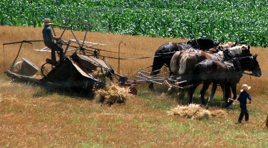 Amish Heartland Tours: Thrashing Time