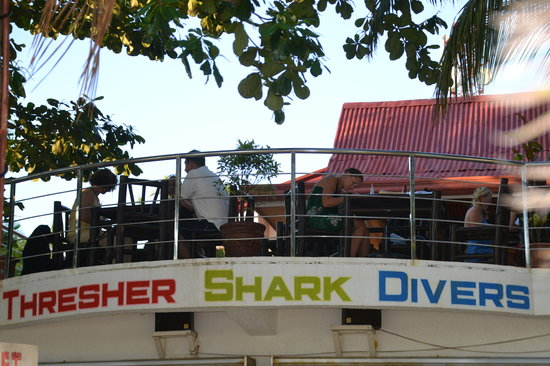 Thresher Shark Divers: The bar and restaurant