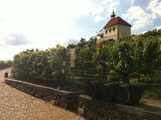 Prague Botanical Garden: St. Claire's Vineyard