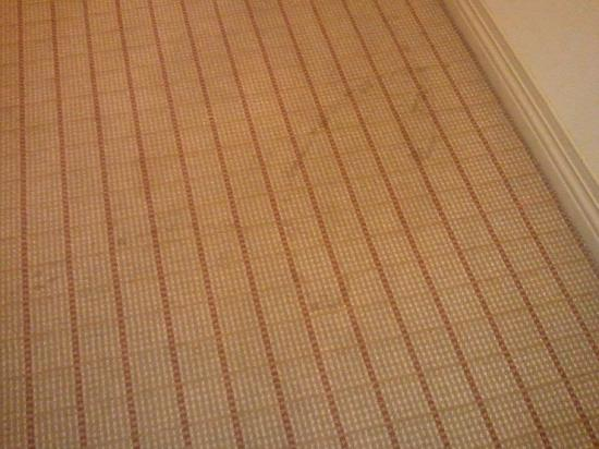 Sheraton Phoenix Airport Hotel Tempe: Stained entry carpet