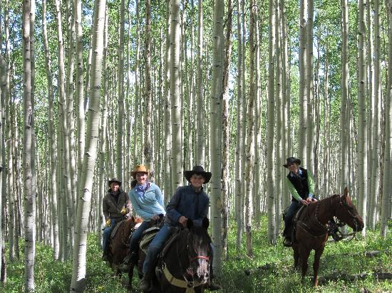 Elk Mountain Ranch: Aspen forests
