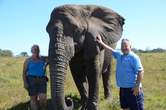 Knysna Elephant Park: The matriarch
