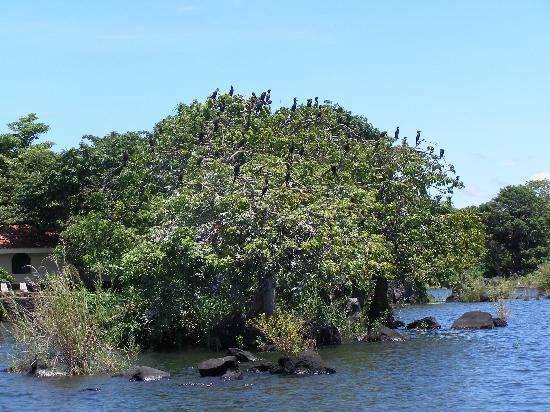 Isletas El Roble: L'arbre aux oiseaux