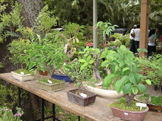 Foto de jardin japones buenos aires vivero tripadvisor for Vivero tu jardin