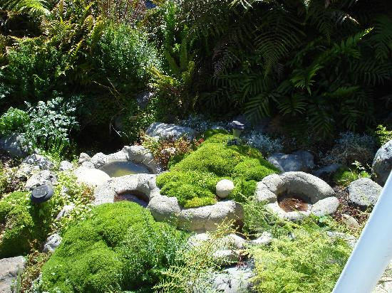 Bay-view Homestay Kaikoura: Lovely garden