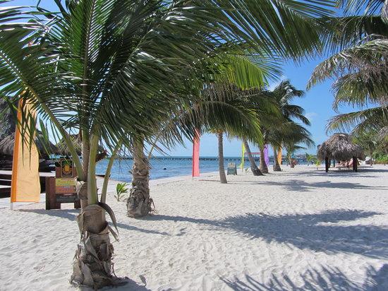 Ramon's Village Resort: Beach view