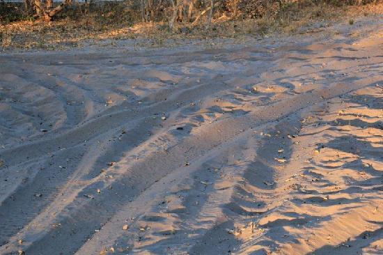 "Linyanti Reserve, Botsuana: ""Camino"""