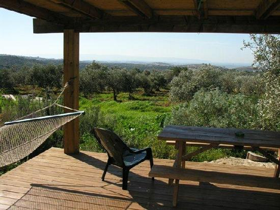 Among Olives and Carobs: View from the big cabin all the way to the sea