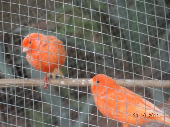 Hotel Petit Cala Fornells: Aviary next door to hotel