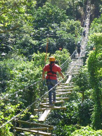 Orocovis, Puerto Rico: El camino de la iguana