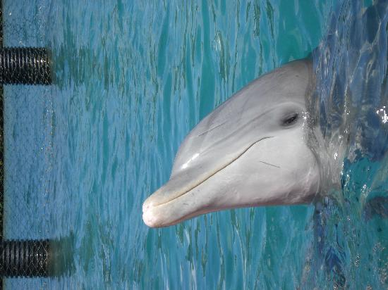 Melia Cayo Santa Maria: Encounter with dolphins
