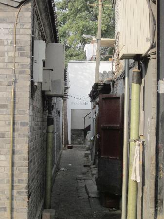 The Orchid Hotel: Look more closely and there it is.  The Alley is suspect but the place is great!