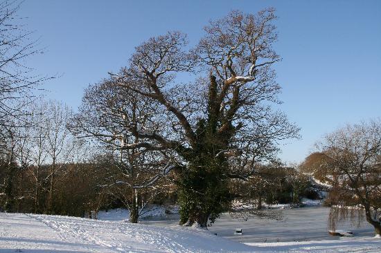Newnham Farm: View to the pond