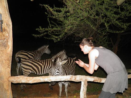 Leopard Walk Lodge : zebras