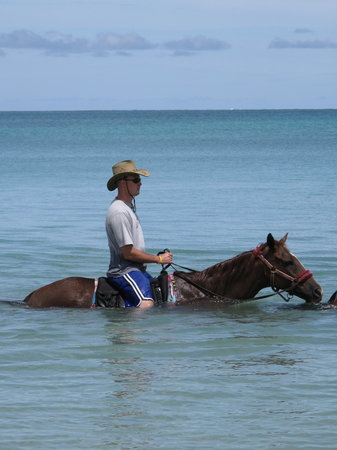 Being with Horses: Swimming with horses