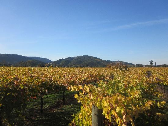 O'Brien Estate Winery: View from standing on the picnic table