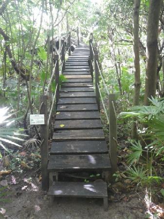 Xanadu Island Resort: nature walk in the trees