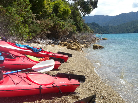 Marlborough Sounds Adventure Company - Day Tours : Kayaking the Sounds of Marlborough