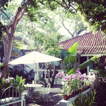 Gardenia Guesthouse: Garden