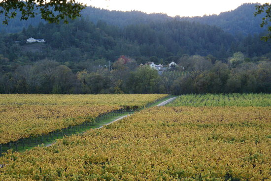 Wilson Winery: view from patio