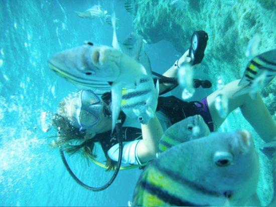Dive Paradise Cozumel: Bailey's Discover Scuba Experience
