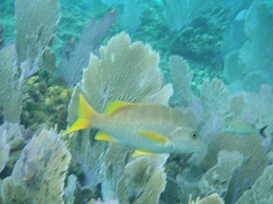 Dive Paradise: Snorkeling Trip
