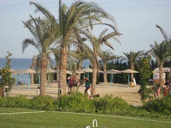 The Three Corners Sunny Beach Resort: kamelridning på stranden