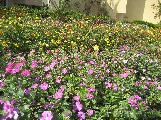 The Three Corners Sunny Beach Resort: blommor...