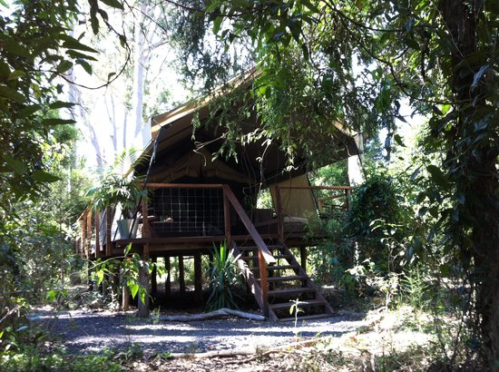Paperbark Camp: Nested among trees