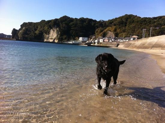 Country Inn Kakui: A dog friendly beach as well!