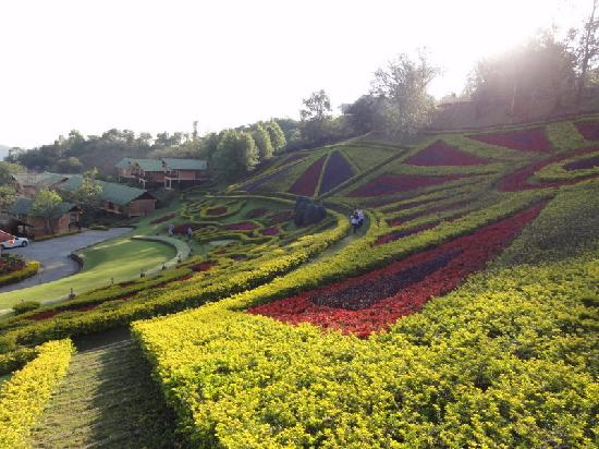 Mae Salong Flower Hills : giardini
