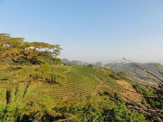 Mae Salong Flower Hills : panorama