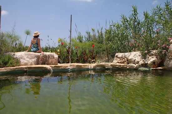 Among Olives and Carobs: The ecological swimming pool