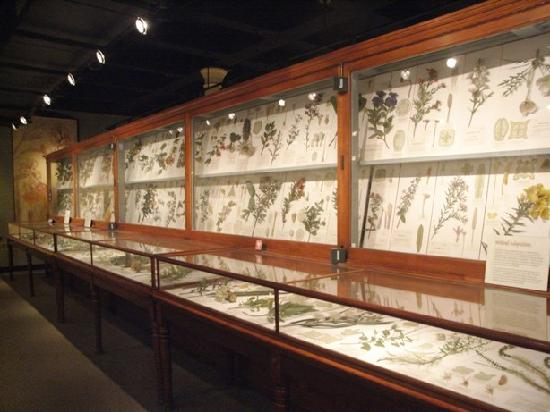 amethyst geode picture of harvard museum of natural. Black Bedroom Furniture Sets. Home Design Ideas