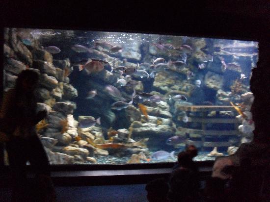 Aquarium Mare Nostrum: Bassin 1
