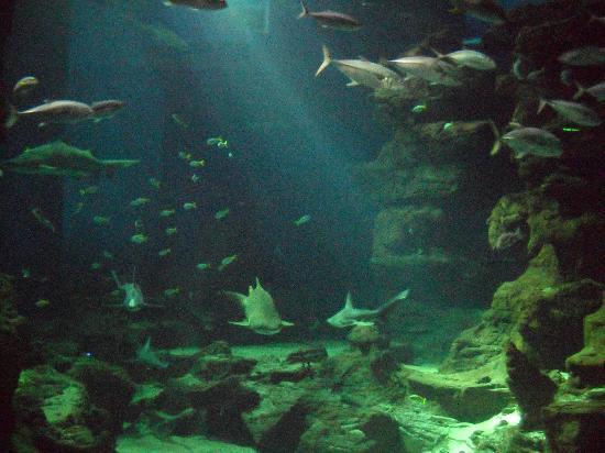 Aquarium Mare Nostrum : Bassin 2