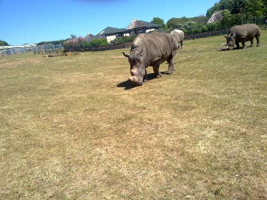 Africa Alive!: The Rhinos