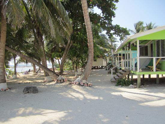 Tobacco Caye Lodge: The cabins - green, blue, yellow