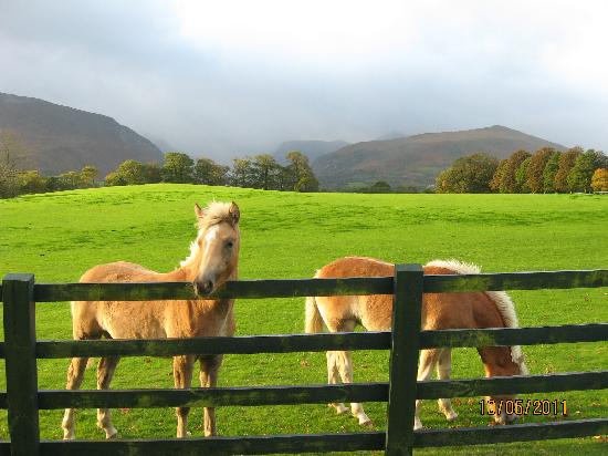 The Dunloe: Imagine being greeted by these ponies and seeing this view as you come and go.