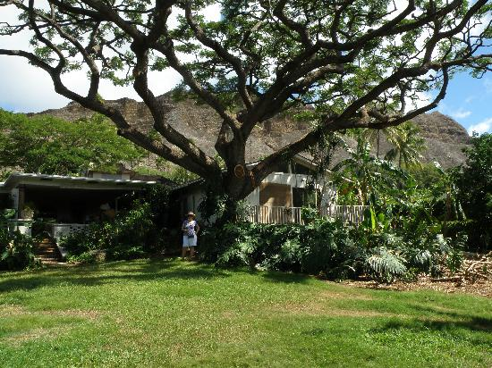 Diamond Head Bed And Breakfast: View from extensive back garden