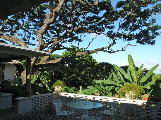 Diamond Head Bed And Breakfast: View from deck